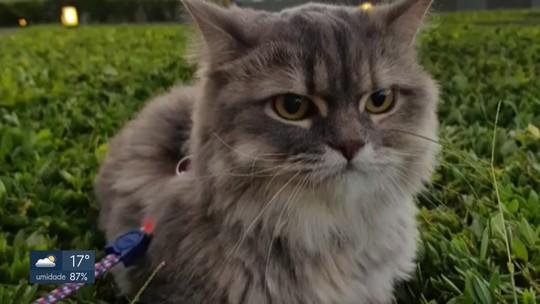 STJ decide que condomínio em Samambaia não pode proibir criação de gata