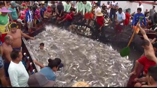 Com o fim do defeso, pescadores comemoram a retomada da pesca do Mapará