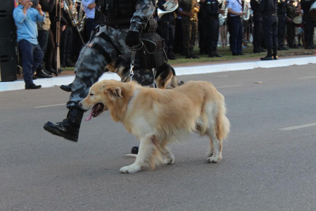 Cachorro da Polícia Militar participou do desfile da independência em Porto Velho — Foto: Diêgo Holanda/G1