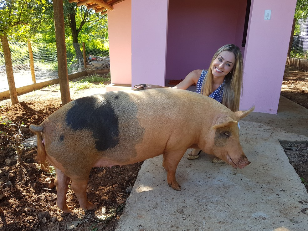 Paula apresenta sua porca de estimação de 150 quilos, a Pippa — Foto: Gabriela Mouta/Gshow