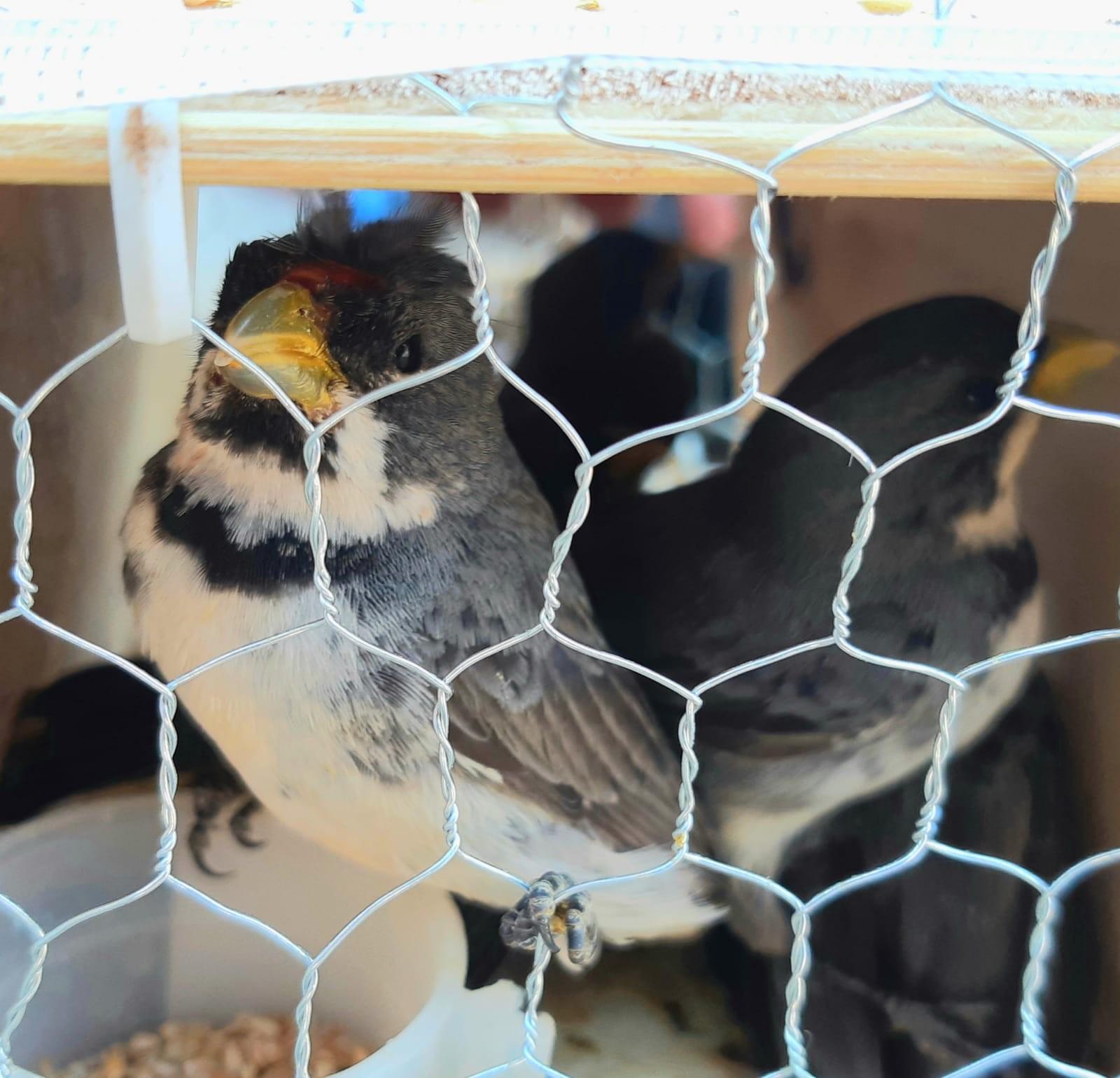 PRF apreende mais de 400 aves transportadas de forma ilegal na BR-365 em Patos de Minas