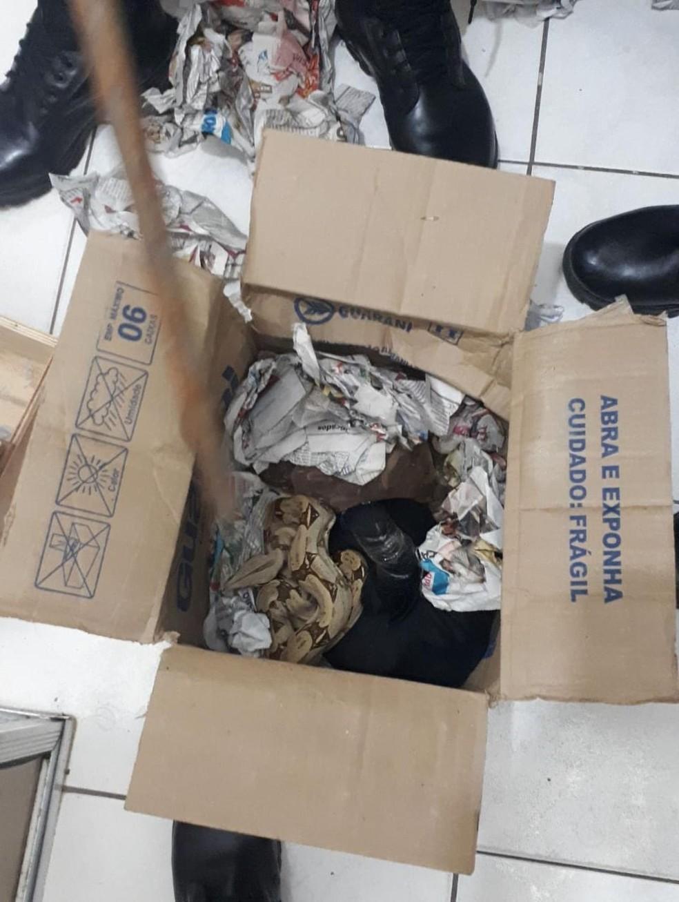 Animais seriam entregues em encomenda pelos Correios — Foto: Polícia Militar/ Divulgação