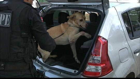 Mais de 40 cães do Bope são treinados para atuar em operações de fim de ano na PB