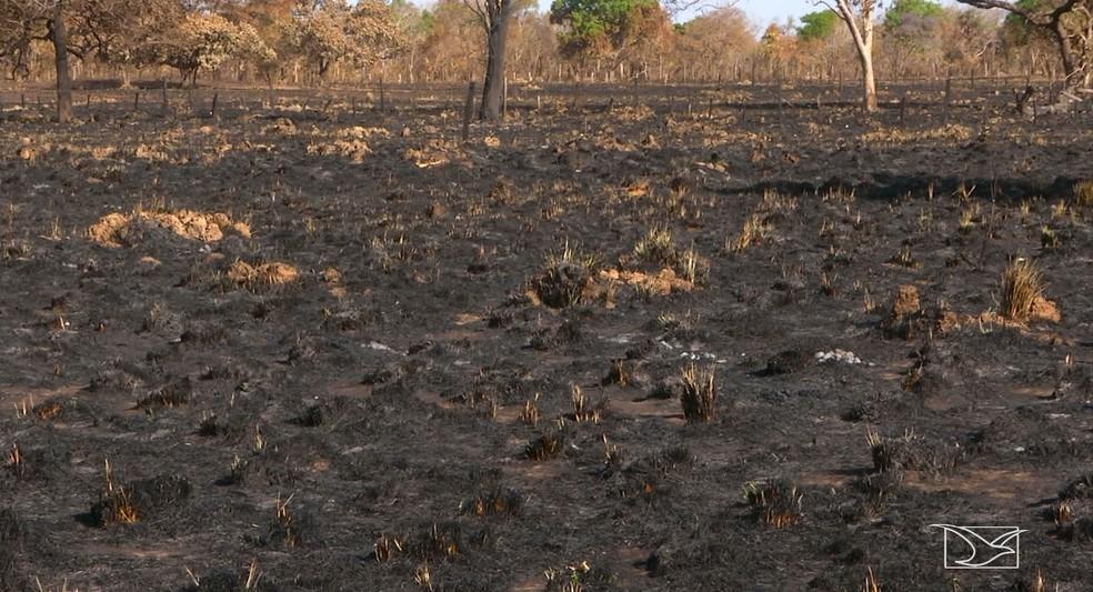 O fogo destruiu mais de 200 hectares de pasto de uma fazenda e além de atingir o capim, o fogo chegou a copa das árvores.  (Foto: Reprodução/ TV Mirante)