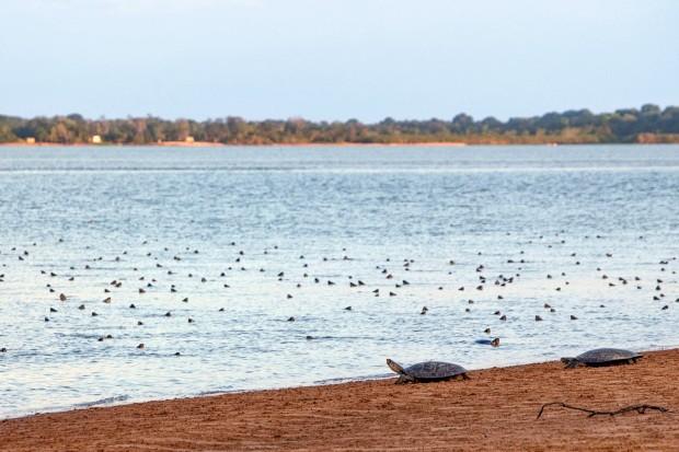 Tabuleiro do Embaubal é uma praia onde cerca de 22mil tartarugas vindo de diversas partes do Rio Xingu vem para desovar. é uma praia de sedimentos que tende a sumir com a barragem de Belo Monte. Alterando o ciclo das tartarugas. Fica próximo a Vitoria do  (Foto: Carol Quintanilha)