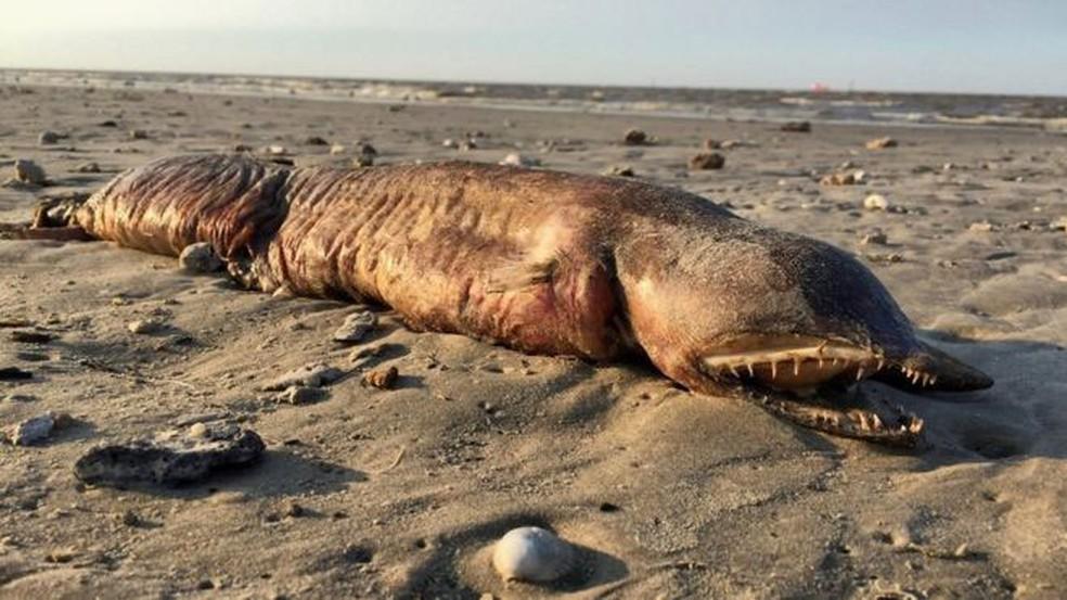 Preeti Desai usou as redes sociais para tentar identificar esse animal, que encontrou numa praia em Texas City (Foto: Twitter/@preetalina/BBC )