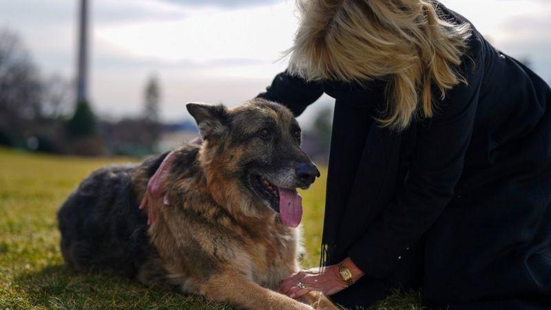 'Todos os cachorros do presidente': conheça Champ, Major e outros cães (e gatos) da Casa Branca