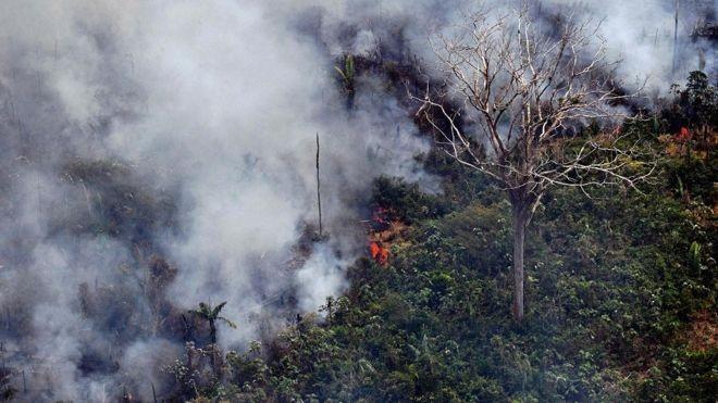 Incêndio na floresta amazônica, a 65 km de Porto Velho, em Rondônia, no norte do Brasil (Foto: CARL DE SOUZA/AFP)