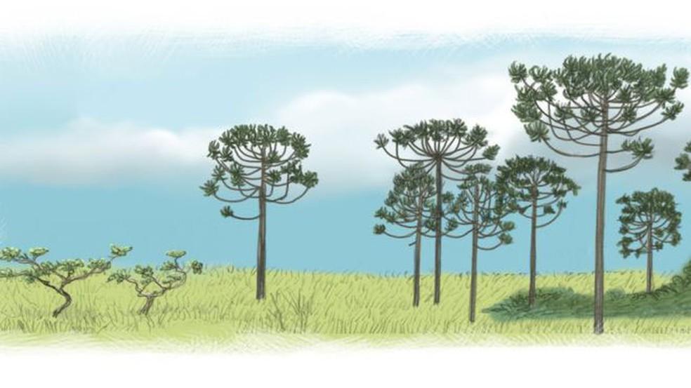 Cerrado e araucárias eram parte da vegetação paulistana (Foto: Leandro Lopes de Souza /BBC)