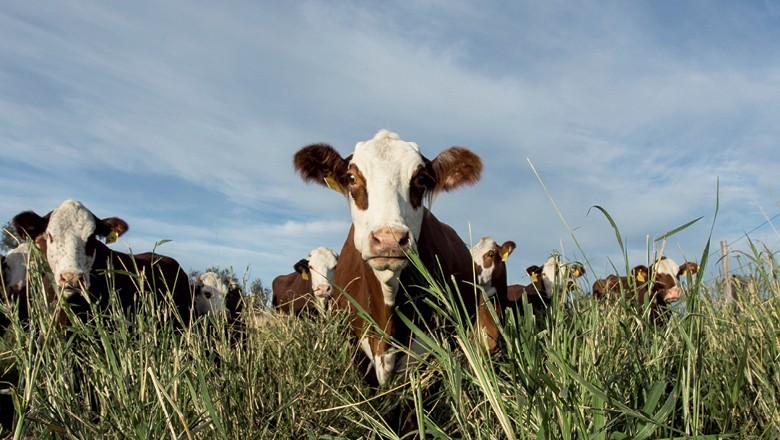 Argentina - Produtores e exportadores agrícolas do país esperam que novo governo evite políticas malsucedidas da gestão Cristina Kirchner (Foto: Getty images)