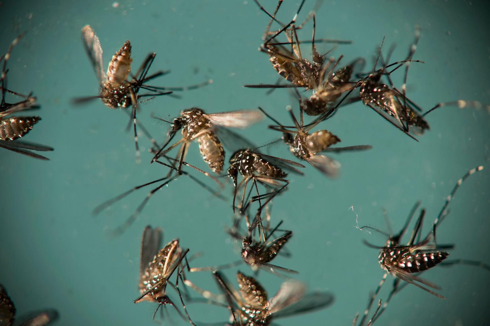 Câmara pede à Prefeitura contratação emergencial de trabalhadores para o combate à dengue em Presidente Prudente