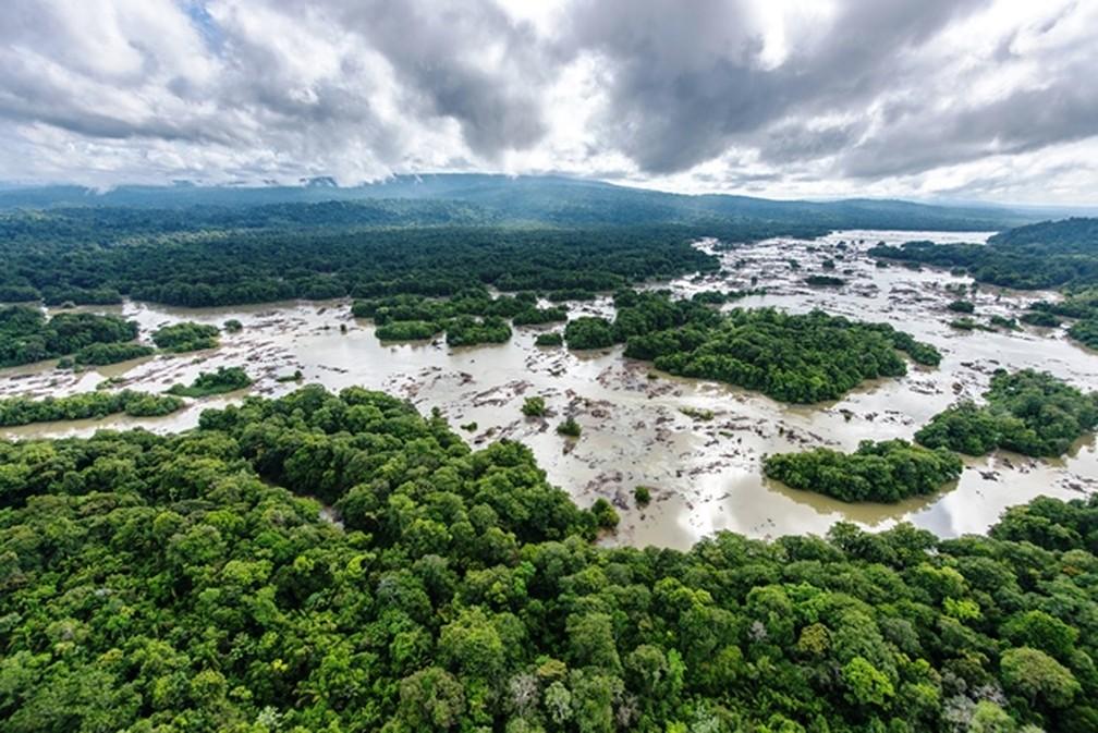 Parque Amazônico da Guiana é a maior reserva florestal da França — Foto: Guillaume Feuillet/Parc amazonien de Guyane