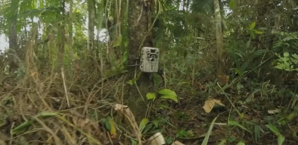 Câmera flagrou presença de felino em uma propriedade de Tapiraí (SP) (Foto: TV TEM/Reprodução)