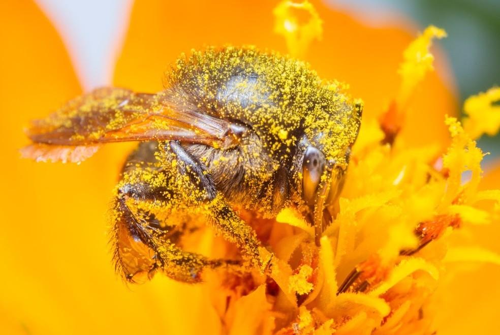 Polinizadoras, as abelhas são essenciais para o equilíbrio dos ecossistemas — Foto: Sidney Cardoso/VC no TG