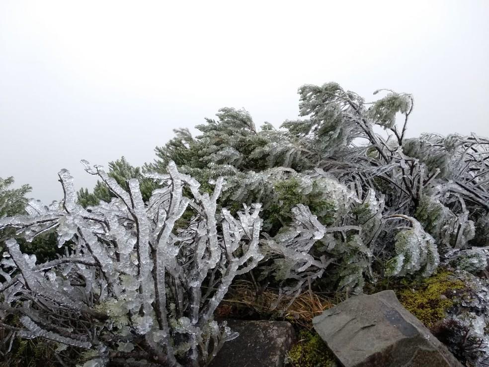 A vegetação amanheceu toda branca coberta de sincelo em Urupema (Foto: Gabriela Machado/ NSC TV)