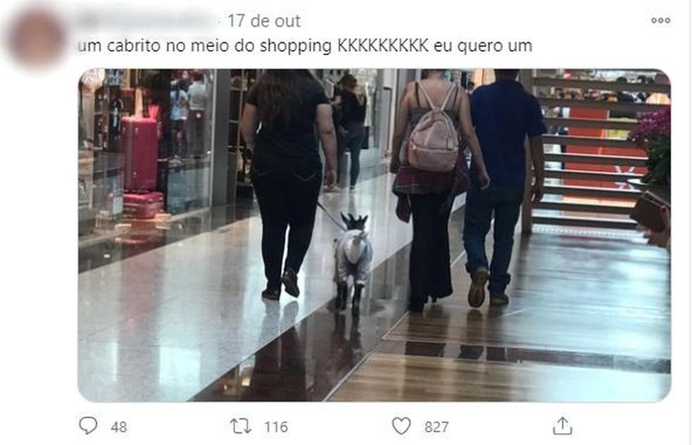 A cabrinha 'Karabina' chamou a atenção na internet ao passear em um shopping de Jundiaí (SP).  — Foto: Reprodução/Twitter