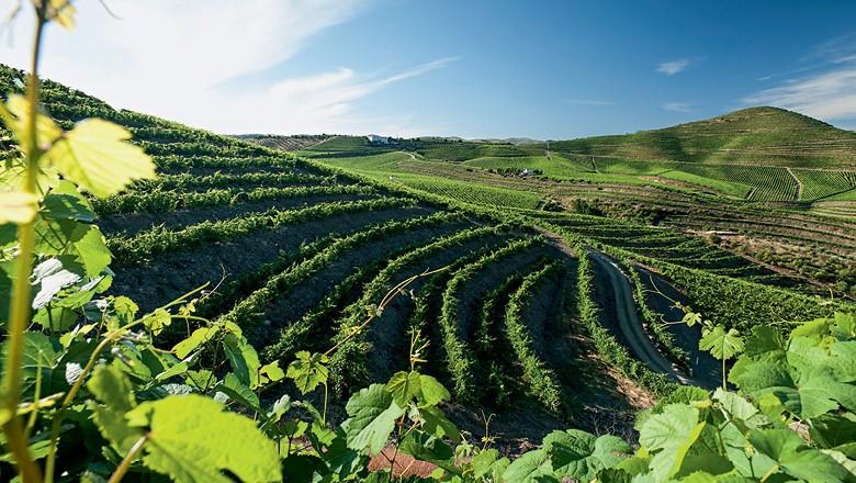 Novos investimentos na região do Vale do Douro estão sendo realizados nas áreas de morros, que exigem cultivos em terraços (Foto:  )