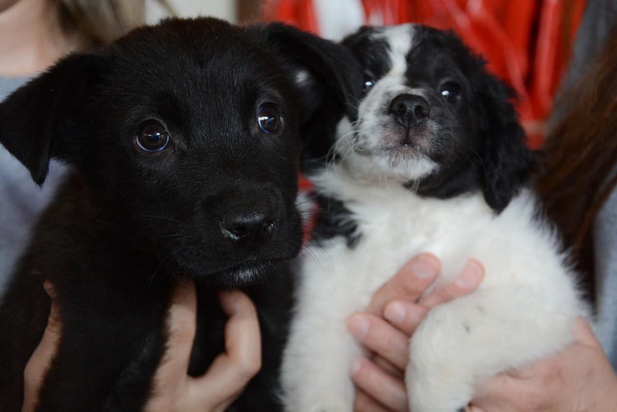 Centro de Zoonoses realiza feira de adoção de animais em Bauru