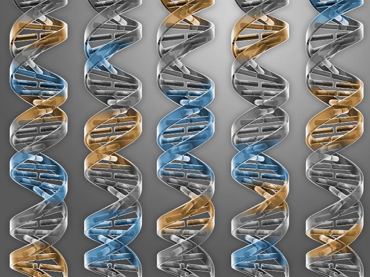 Edição genética de embriões pode ser solução para doenças no futuro; veja comentário de geneticista