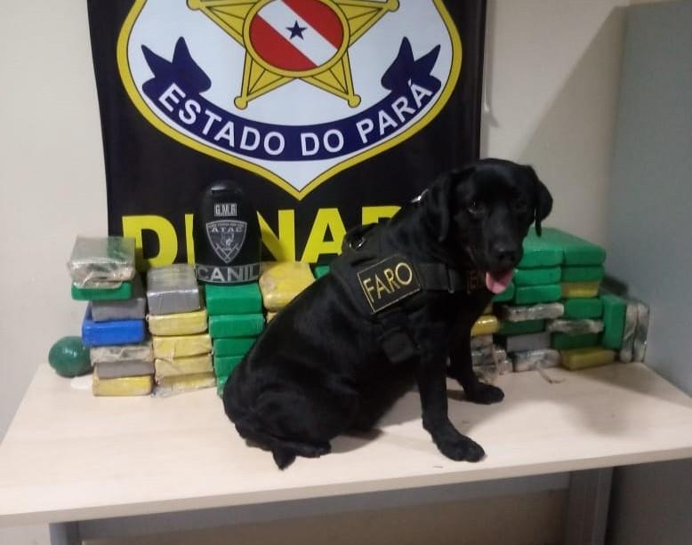 Polícia apreende cerca de 57 kg de cocaína em caminhão no Pará - Noticias