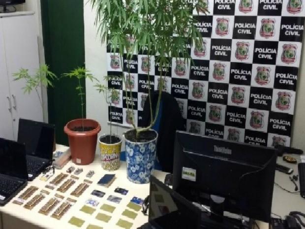 Plantas de maconha foram apreendidas na casa da mulher em Fortaleza (Foto: Divulgação/SSPDS)