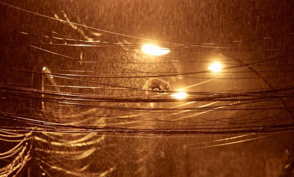 Gambá nos fios de energia no Cosme Velho durante temporal â?? Foto: Marcos Serra Lima/G1 Rio