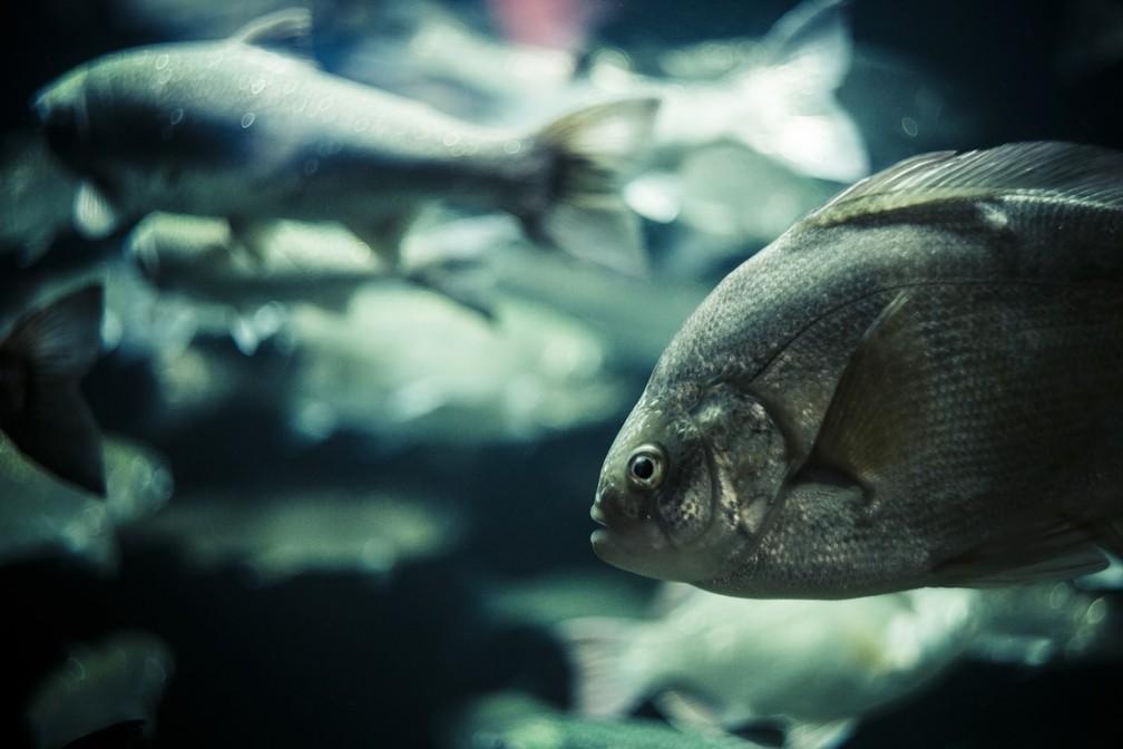 Estudo observou a influência da temperatura na relação entre o tamanho do organismo dos peixes e a sua função no ecossistema — Foto: Carl Findahl/Unsplash