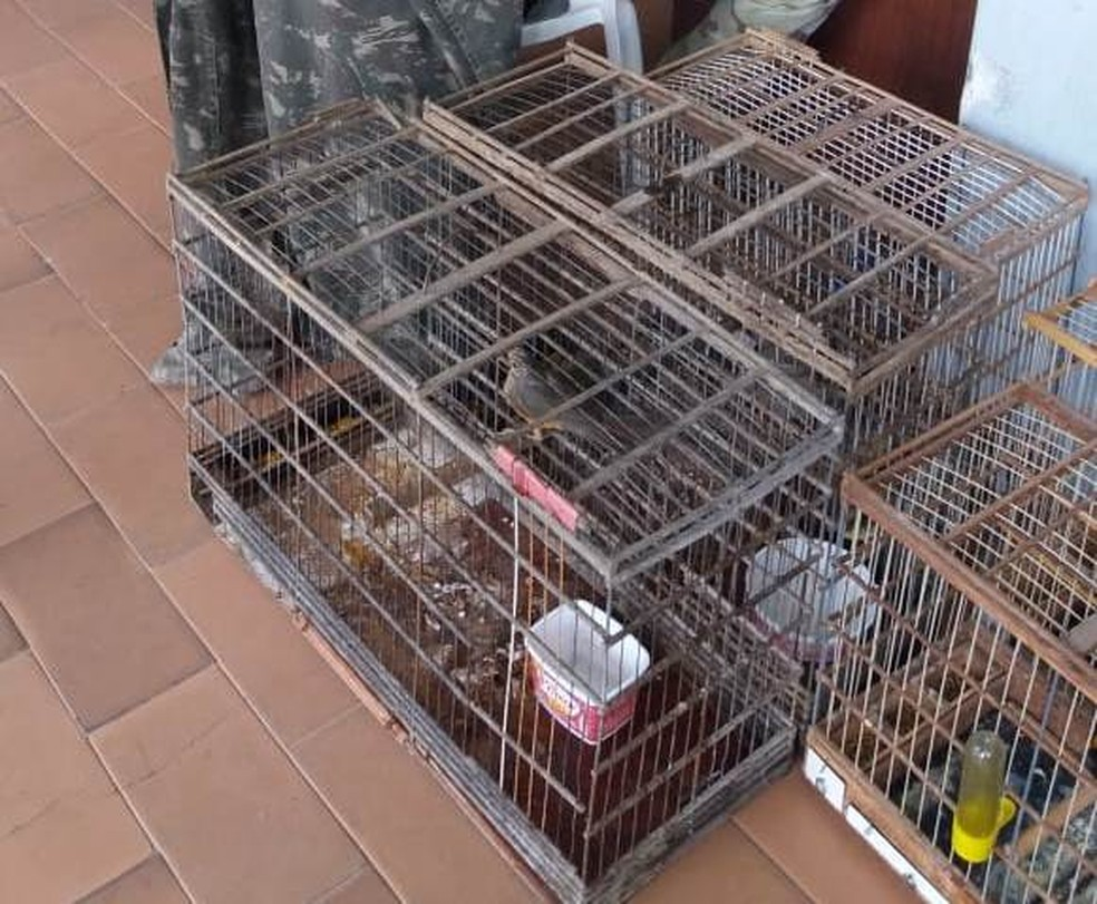 Animais silvestres foram apreendidos durante a operação 'Força no Foco', em Arcoverde (Foto: Polícia Militar/Divulgação)