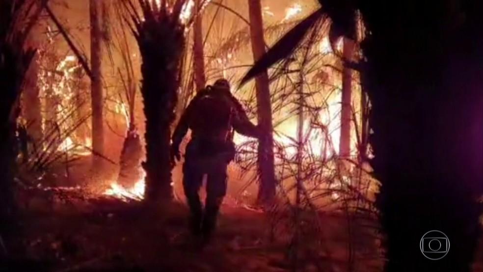 Incêndios no Pantanal voltam a atingir áreas que já tinham sido queimadas — Foto: Rede Globo