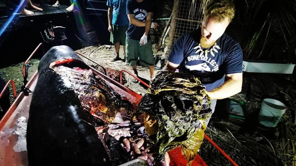 Biólogo retira plásticos do estômago de baleia  — Foto: D'Bone Museum/Facebook