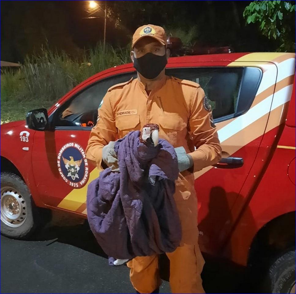 Arara-vermelha com dificuldade para voar é resgatada pelos Bombeiros no quintal de casa em Rorainópolis