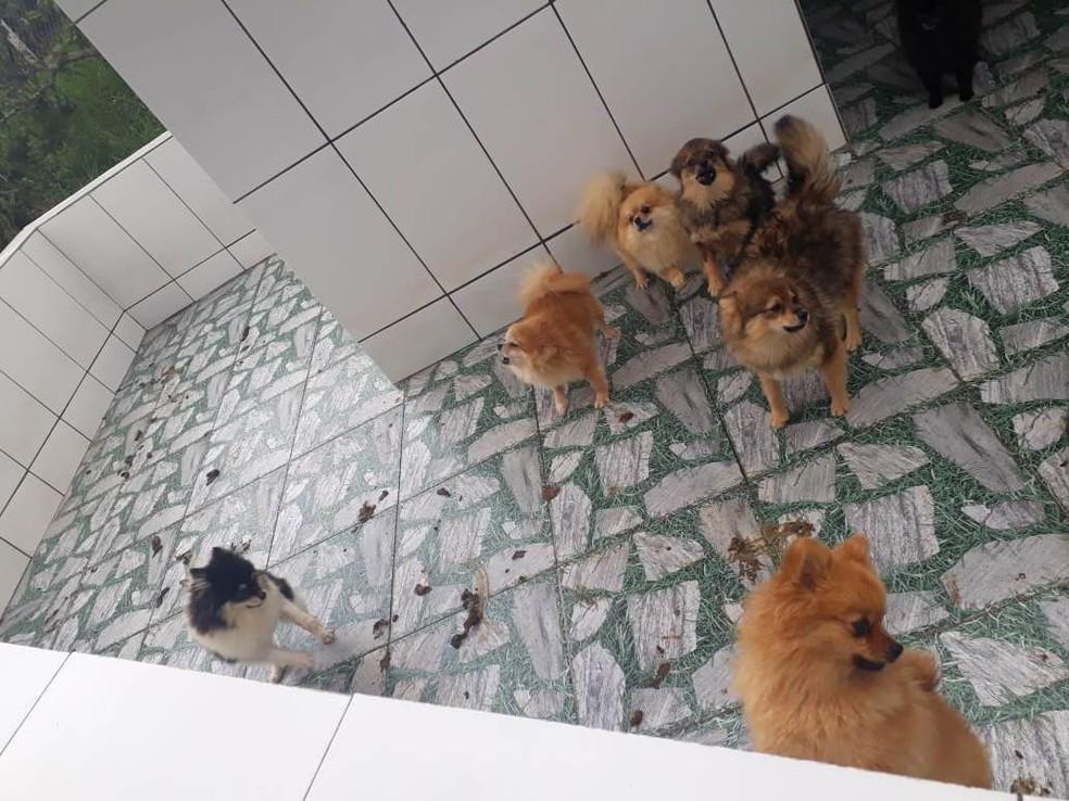 Polícia encontra canil com cerca de mil cães em situação de maus-tratos em Piedade — Foto: Divulgação/PM
