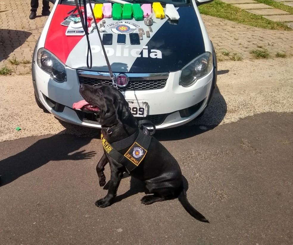 Canil da PM ajudou a encontrar droga em Lucélia — Foto: Polícia Militar