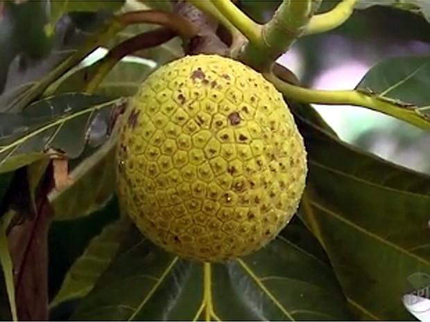 O lendário fruto de uma ilha que provocou motim histórico