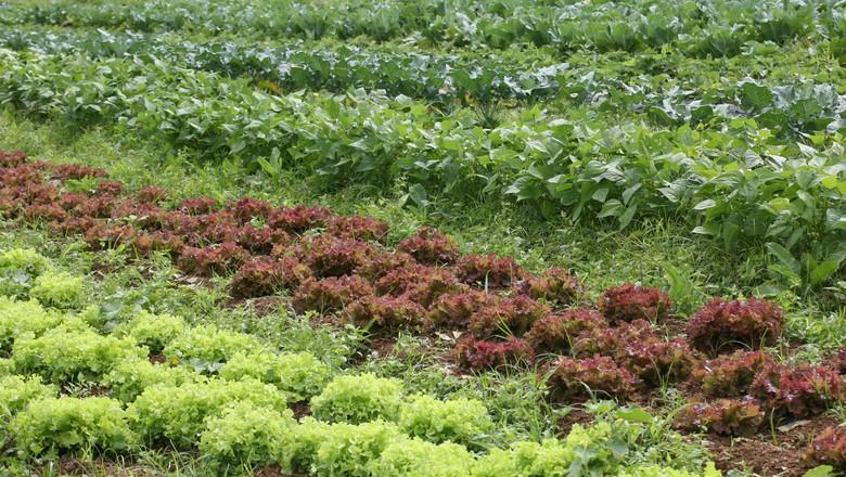 horta orgânica (Foto: Manoel Marques/Arquivo Globo Rural)