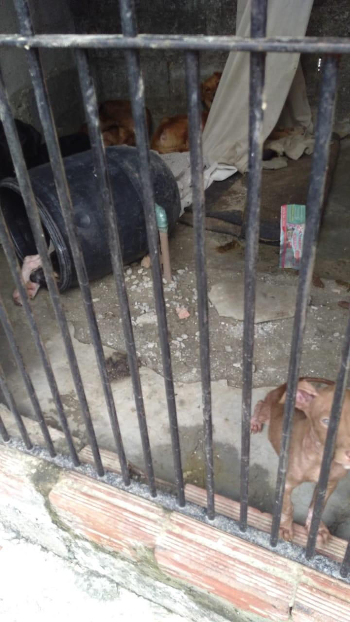 Oito cães vítimas de maus-tratos são resgatados de casa em Mogi  - Radio Evangelho Gospel