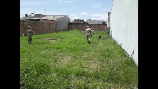 Capivara entra em casa, é cercada por cachorros e bombeiros fazem resgate em MT; veja vídeo