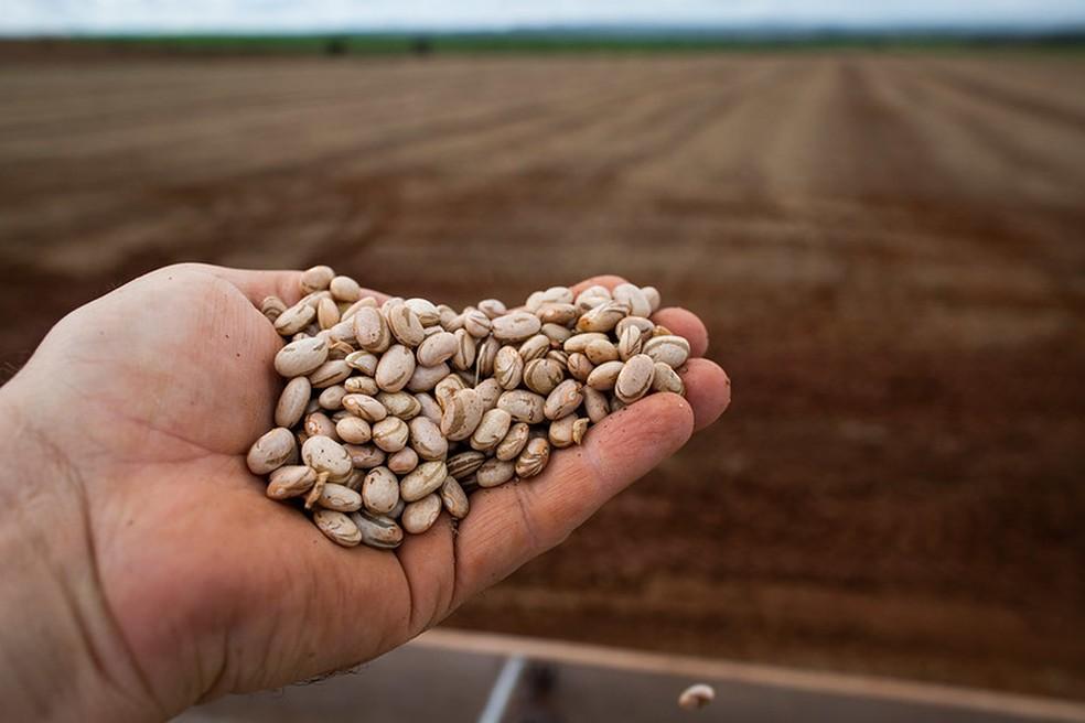 Alguns produtores desistiram de plantar a terceira safra de feijão entre maio e julho. — Foto: Divulgação/Confederação Nacional da Agricultura e Pecuária do Brasil (CNA)