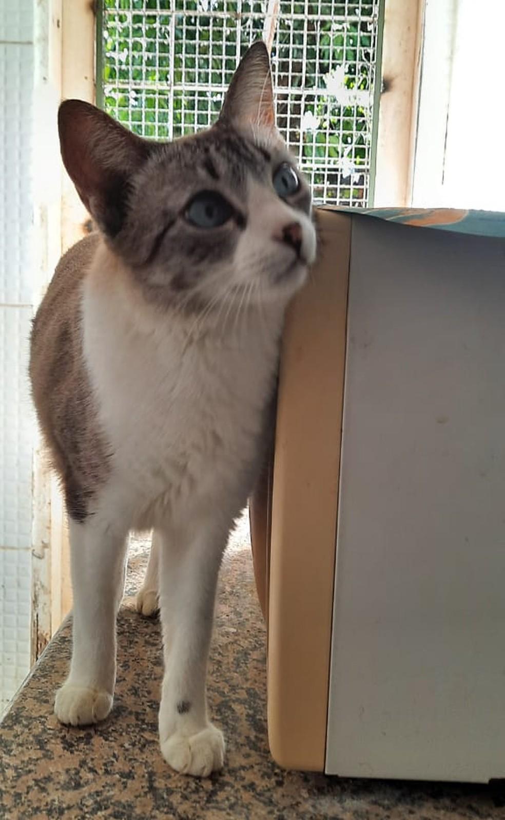 Segundo a presidente da ONG Formiguinhas, haviam 27 gatos na casa de Francisca — Foto: Cristiane Cortez/ Divulgação