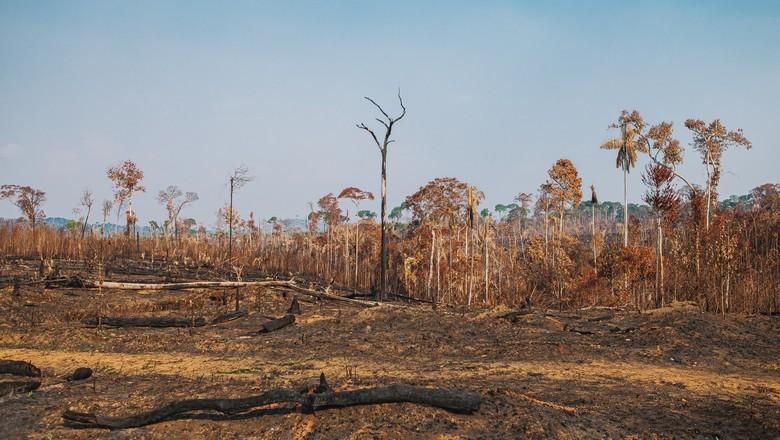 queimadas-amazonia-fogo-rondonia-incendio-machado-do-oeste (Foto: Beethoven Delano/Ed.Globo)