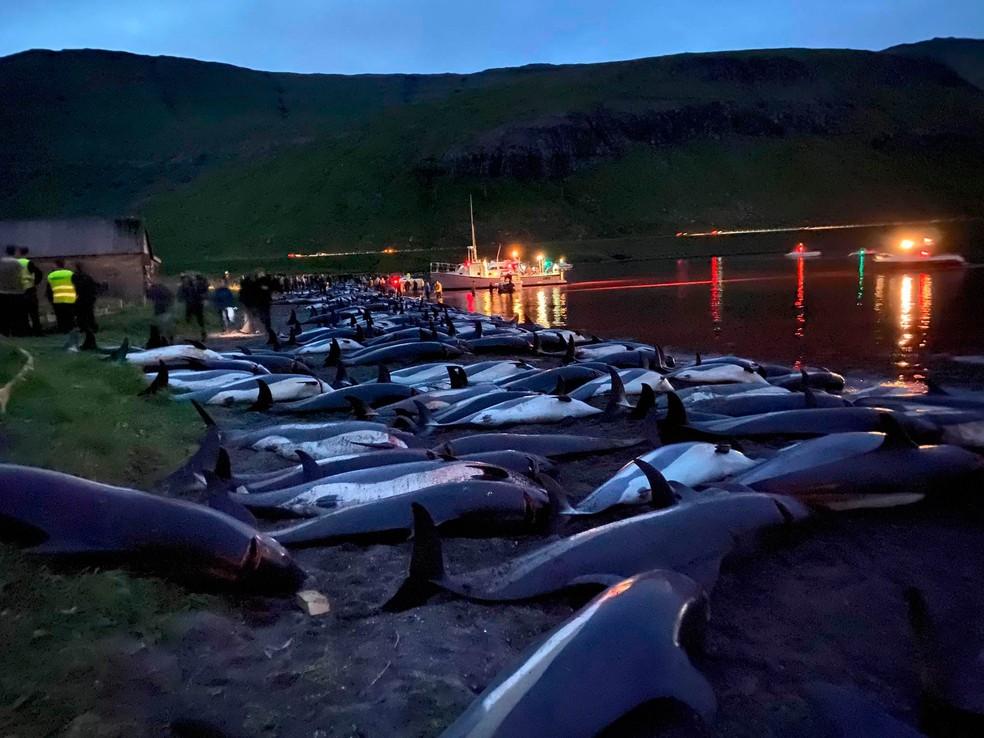 Matança de golfinhos nas Ilhas Faroé, no Atlântico Norte, na Dinamarca. — Foto: Sea Shepherd Conservation Society/via AP