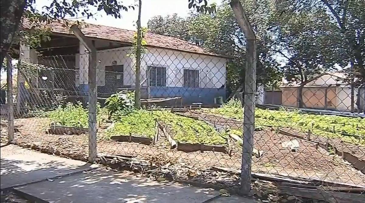 Projeto de hortas comunitárias gera renda para famílias de Botucatu - G1