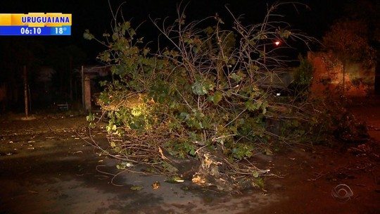 Temporal provoca destelhamentos de casas e queda de árvores no Rio Grande do Sul
