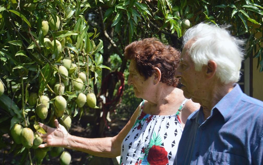 Casal de Piracicaba, Emília e Antenor, estão juntos há 59 anos (Foto: Larissa de Sousa/Arquivo pessoal)