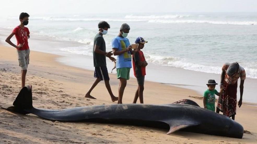 Pelo menos três animais não resistiram e morreram antes do resgate — Foto: EPA