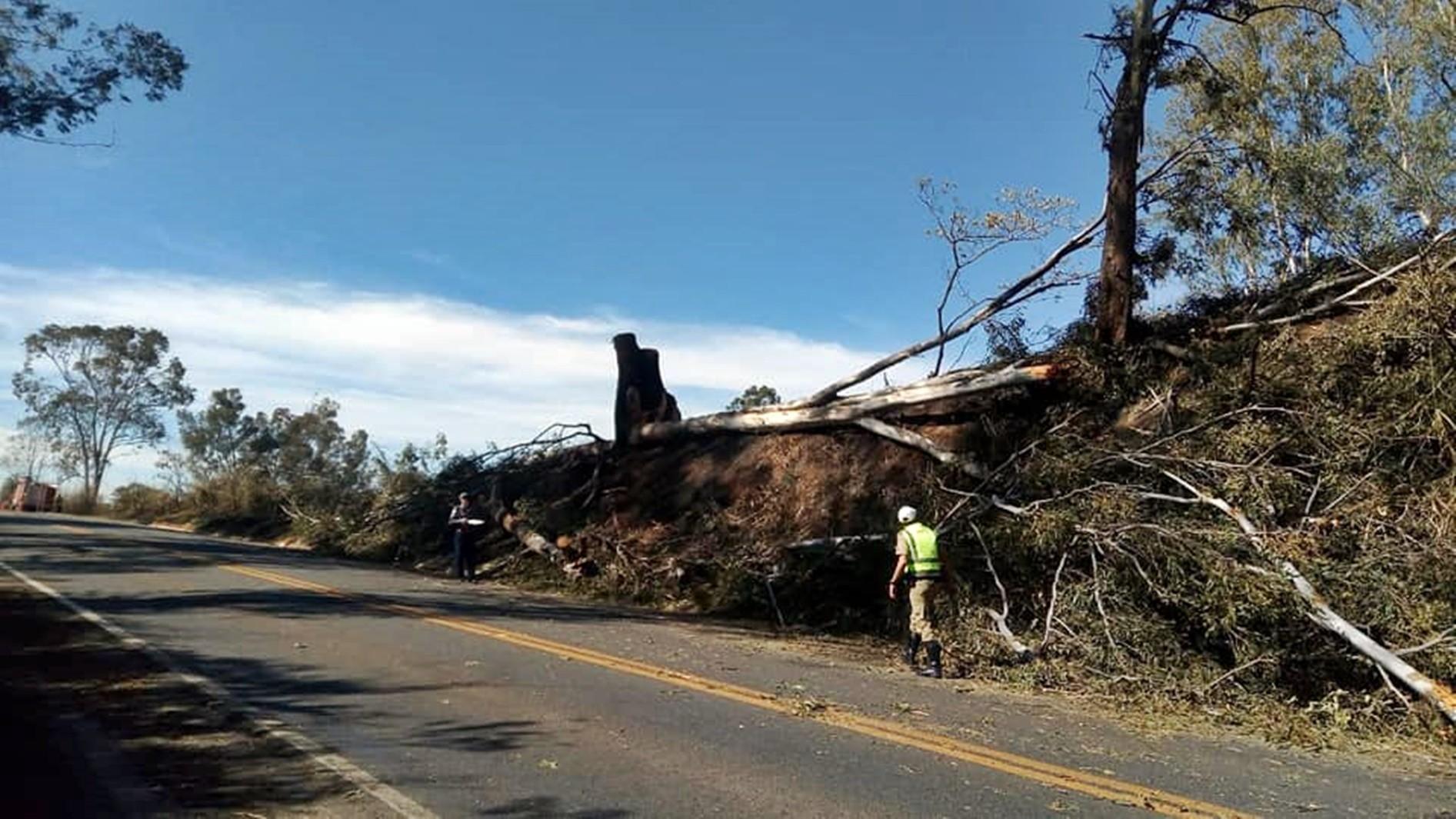 Trânsito na BR-491 fica interditado para retirada de árvores condenadas em Guaxupé, MG - Notícias - Plantão Diário