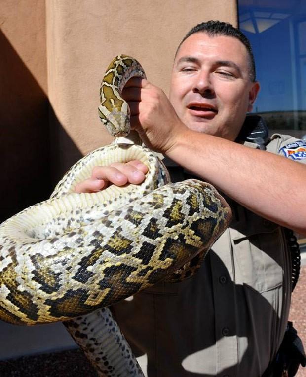Policial Johnny Martinez segura a cobra resgatada do motor de um carro em santa Fé (Fot  AP Photo/Santa Fe Police Department)
