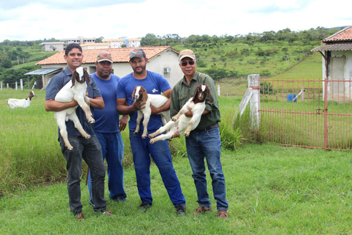 Biotecnologia melhora produção de caprinos na BA; animal pode ter 300% a mais de carne por dia | Bahia