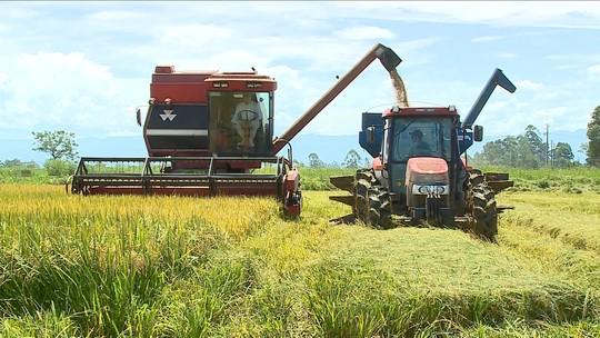 Produtores de arroz de SC esperam colheita de 5% a 15% maior em 2017