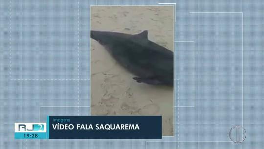 Golfinho é encontrado morto em praia de Saquarema, no RJ